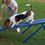 Bassets can Teeter too!