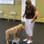 Puppy Class - Platform Training