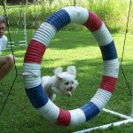 Roxie sails through the Tire Jump