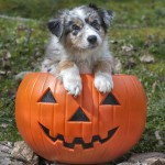 Halloween Safety & Comfort for Your Dog
