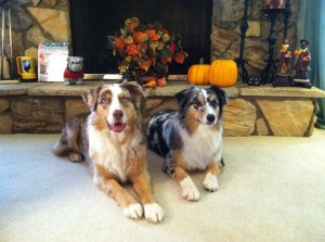 willow and cody with pumpkin