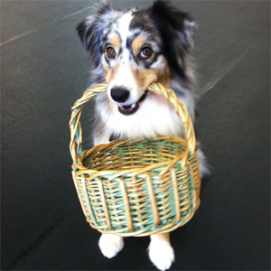 Dog with a basket