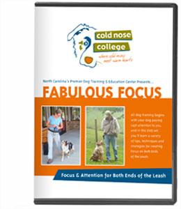 fab focus dvd