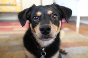 Rufus face