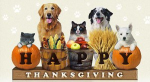 happy thanksgiving with dogs cats pumpkins