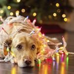 Ease the Stress Your Dog Feels During the Holidays