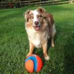 Trainer Tried & Tested – Gifts for the Dog in Your Life (and the dog lover, too!)
