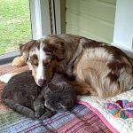 Cat & Dog Introductions – Slow and Steady Does It