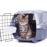 Cat Carrier | Does Your Cat Love It?