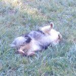 Easily Train a Dog Trick   Capturing a Behavior