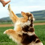 Why Do We Train Our Dogs?| What to Consider