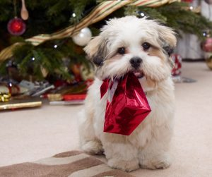 holiday puppy