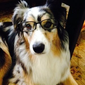 Willow the dog wearing glasses