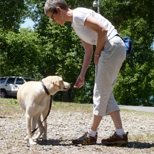 Private Dog Training in Murphy NC
